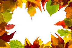 Frame from autumn leaves. Framework from autumn multi-coloured  leaves Royalty Free Stock Image