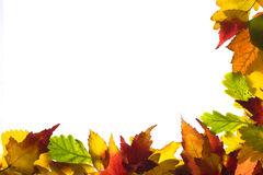 Frame from autumn leaves. Framework from autumn multi-coloured  leaves Royalty Free Stock Photography