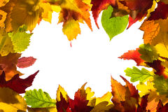 Frame from autumn leaves. Framework from autumn multi-coloured  leaves Stock Image