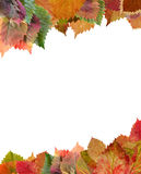 Frame from autumn leaves Royalty Free Stock Image