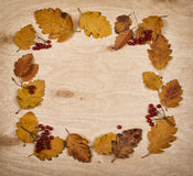 Frame from autumn leaves collection and berry on wooden Royalty Free Stock Image