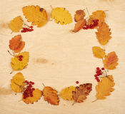 Frame from autumn leaves collection and berry on wooden background Stock Photos