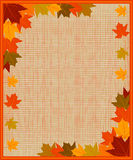 Frame with autumn leaves Royalty Free Stock Photos