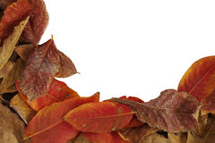 Frame of autumn leaves, dried fall leaves isolated on white back Stock Photos
