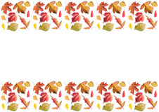 Frame of autumn leaves, horizontal. Collection of bright, colorful leaves: birch, maple, elm, ash, rowan. Frame of autumn leaves, horizontal, in bright orange stock image