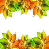 Frame from autumn leaves Royalty Free Stock Photo