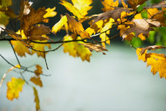 Frame with autumn leaves. Autumn leaves on lake's background Royalty Free Stock Images