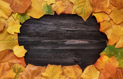 Frame with autumn leaves of Liriodendron on a wooden background Royalty Free Stock Photo