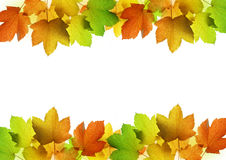 Frame from autumn leaves of maple tree Royalty Free Stock Photography