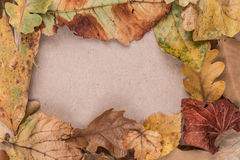 Frame by autumn leaves Royalty Free Stock Image
