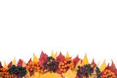 Frame of autumn leaves with rowan berries and wild grapes isolated on white background Stock Photos