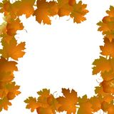 Frame of autumn leaves. Frame with autumn leaves on a white background vector illustration