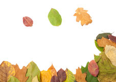 Frame of autumn leaves Royalty Free Stock Photography
