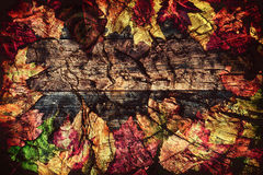 Frame of Autumn Leaves on Wood Grunge Layer Royalty Free Stock Photos