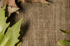 Frame of autumn leaves and wool background, empty space for text Stock Photography