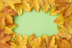 Frame from autumn leaves Royalty Free Stock Photography