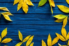 Frame of autumn leaves. Yellow and green leaves on the borders on blue wooden background top view copy space royalty free stock photography