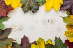 Frame of autumn leaves in yellow, green and brown Royalty Free Stock Image