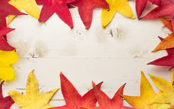 Frame of autumn leaves in yellow and red Royalty Free Stock Photography
