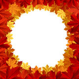 Frame with autumn maple leafs Royalty Free Stock Images