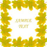 Frame of autumn maple leaves Royalty Free Stock Photography