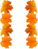 Frame of autumn maple leaves Stock Photography