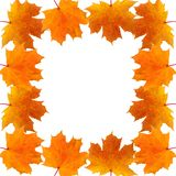 Frame of autumn maple leaves Royalty Free Stock Image