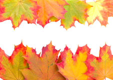 Frame from autumn maple leaves Stock Photos