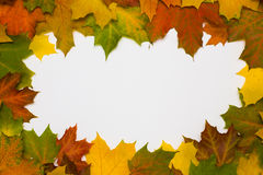 Frame from autumn maple leaves Stock Images