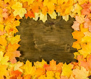 Frame from autumn maple leaves on dark wood Stock Photo
