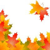 Frame of autumn maple leaves on a white background royalty free stock photos