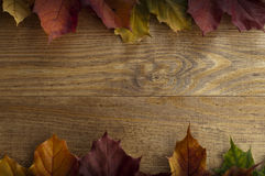 Frame of autumn maple leaves on a wooden background. Multicolored autumn maple leaves lying on a wooden surface on the top and bottom edge of the frame Royalty Free Stock Images