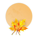 Frame  with autumn maple leaves Royalty Free Stock Image