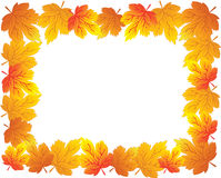 Frame with autumn plants Royalty Free Stock Photos