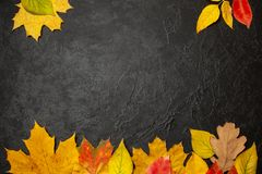 Frame of autumn yellow leaves on black background. Concept menu or balank. mock-up stock photos