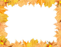Frame of autumn yellow leaves with empty place Stock Image
