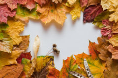 Frame of autumnal leaves Stock Images