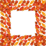 Frame of autumnal leaves Stock Photo