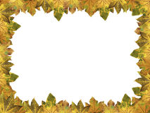 Frame of autumnal maple leaves. Frame of cutout maple leaves, autumnal colors, design for thanksgiving royalty free stock photography