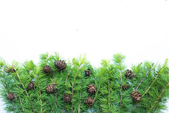 Frame, background with christmas tree branches and cones. Stock Images