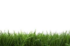 Frame background with green grass Stock Photography