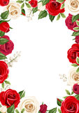 Frame background with red and white roses. Vector illustration. Stock Photo