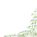 Frame of bamboo leaves Stock Images