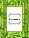 Frame with bamboo plants and leaves.  Stock Photography