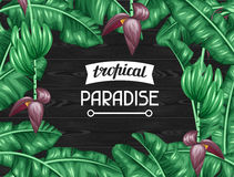 Frame with banana leaves. Decorative image of tropical foliage, flowers and fruits. Design for advertising booklets Royalty Free Stock Images