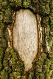 Frame of bark Stock Photography