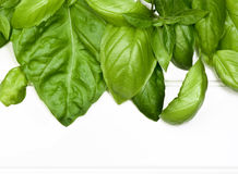 Frame of Basil Leafs Stock Photography