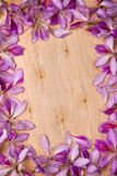 Frame with bauhinia petals Royalty Free Stock Image