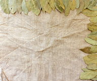 Frame of bay leaves Royalty Free Stock Photo