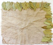 Frame of bay leaves Royalty Free Stock Photography